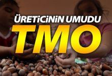 TMO Fındık İçin Devreye Giriyor