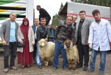 Genç Çiftçilere Küçükbaş Hayvan Dağıtıldı